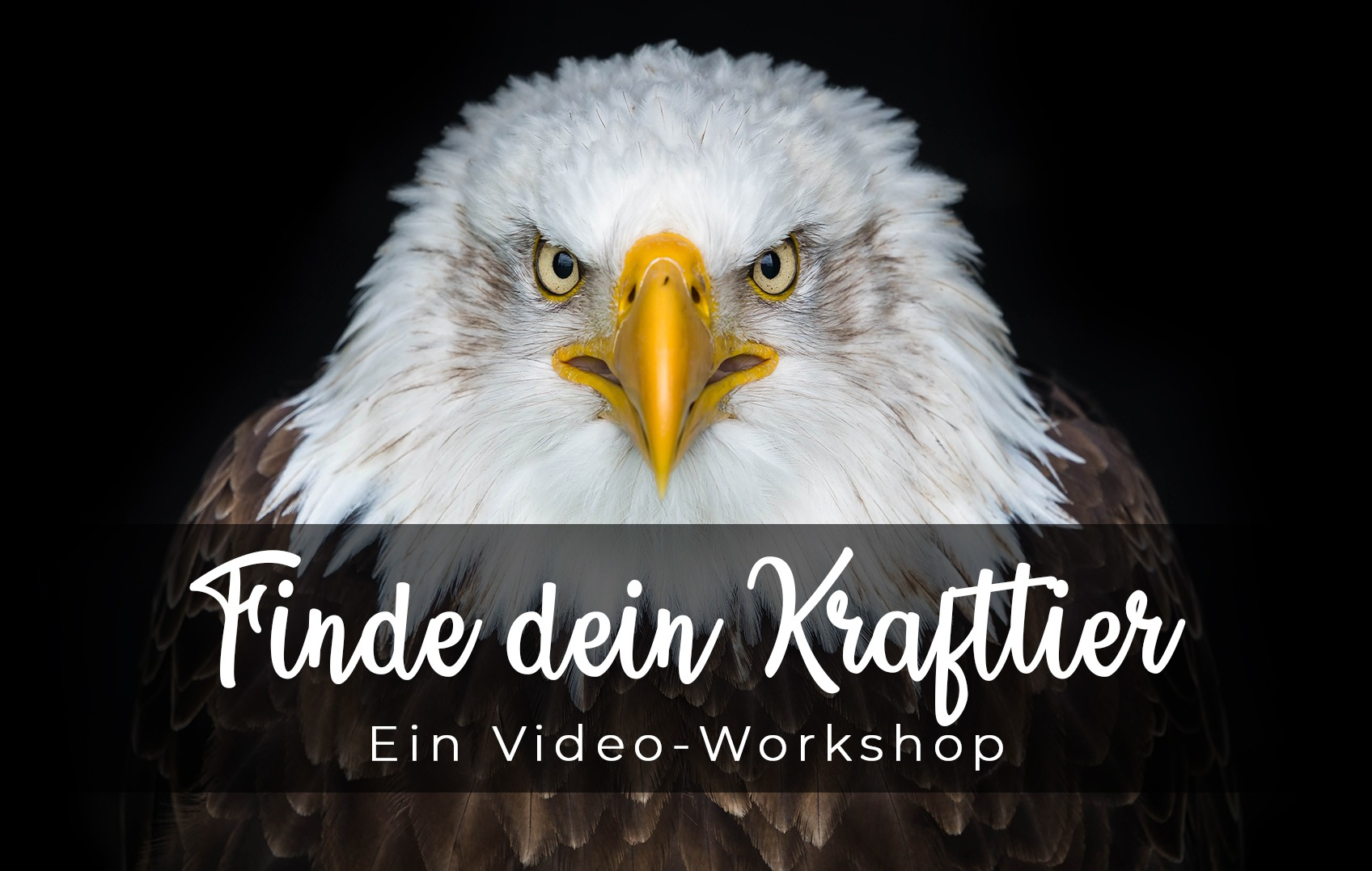 Finde dein Krafttier - Workshop