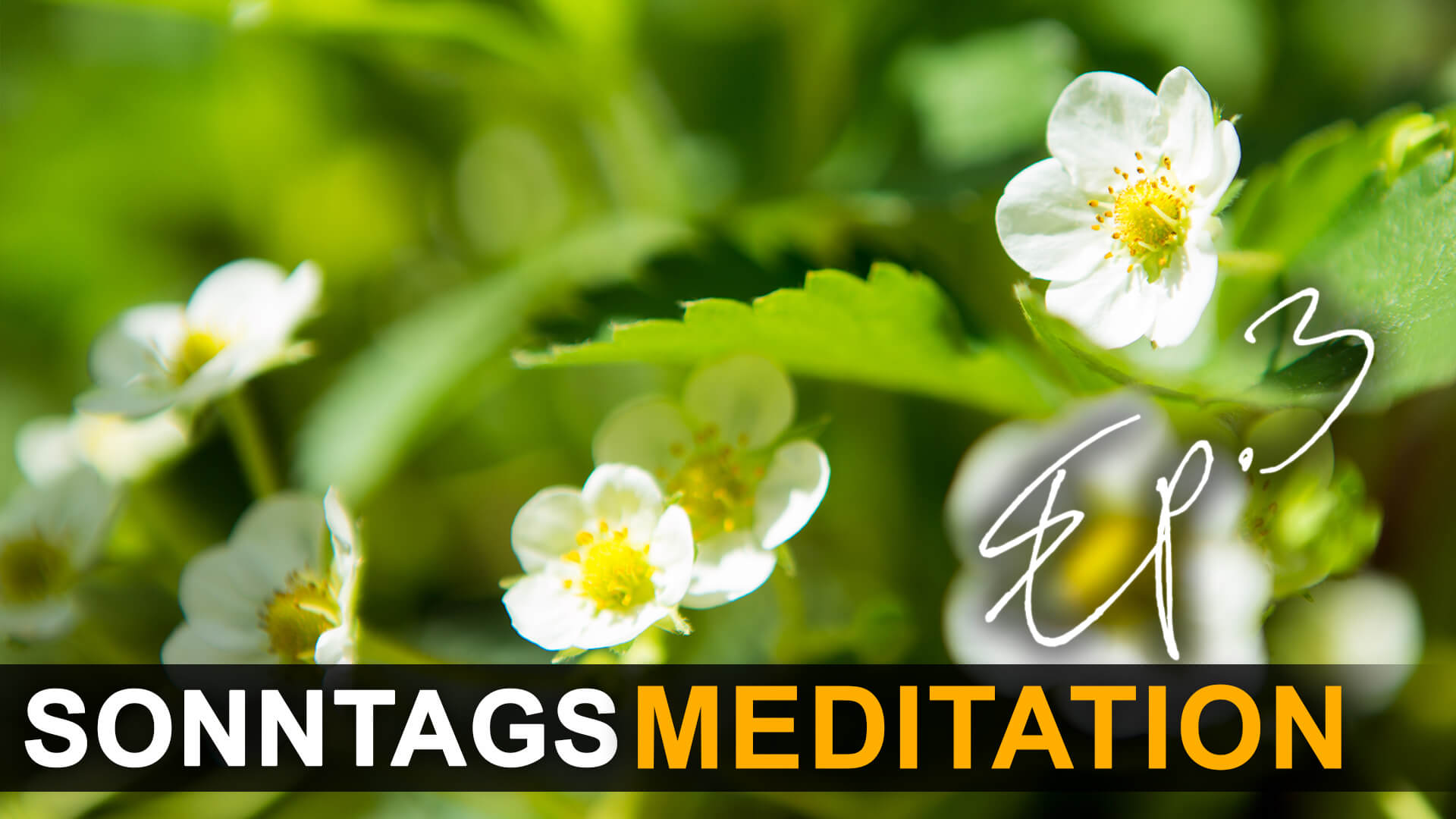 Meditations-Sonntag_EP3